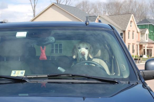My driver.