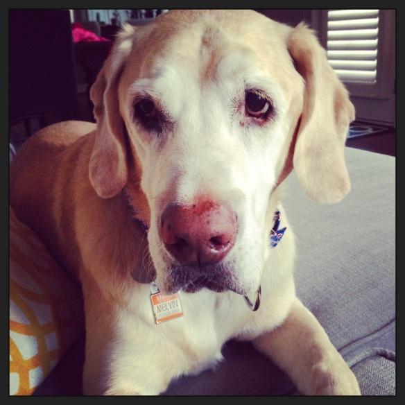 Heart dog.