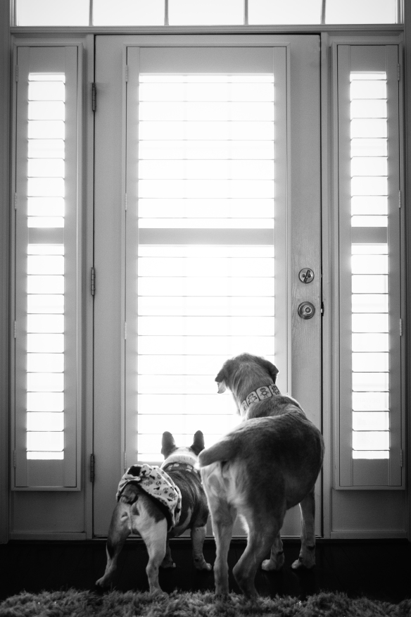 kate_juliet_photography_pets_melvin_022635-2